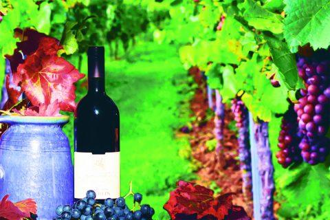 Me gusta el vino… porque el vino es bueno!!!